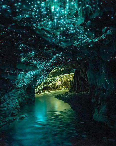 Glowworm Caves, New Zealand. Learned about these at the Field Museum. SO AWESOME!