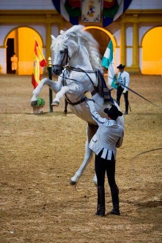 Doma de caballos en Jerez de la Frontera.