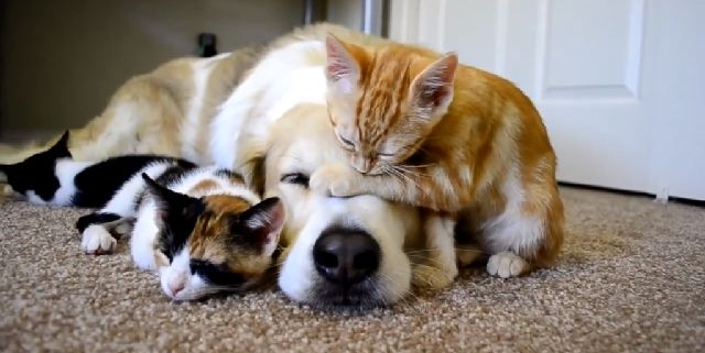 Everyone LOVES kittens and dogs...amiright?!   Here is a little something to calm your nerves and soothe your soul just a little bit after Election Day.