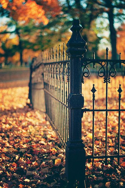 Wrought iron fence stands in stark contrast to a c…