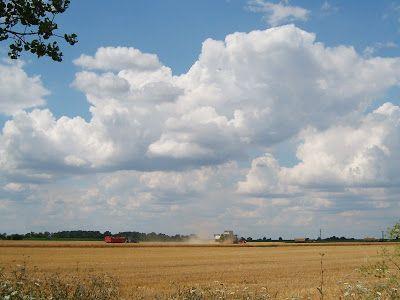 Szánter blogja.: Elkezdődött az aratás.