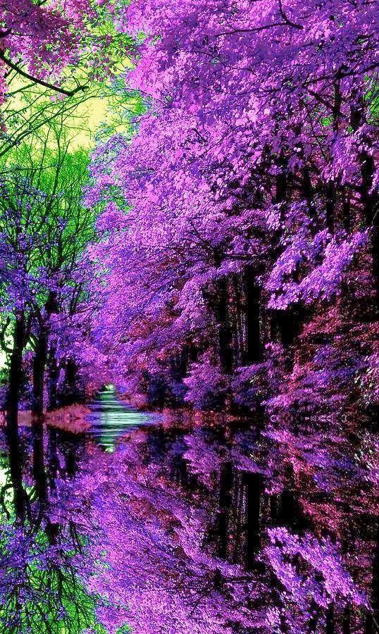 Beautiful Ashikaga Flower Park in Tochigi Prefecture, Japan