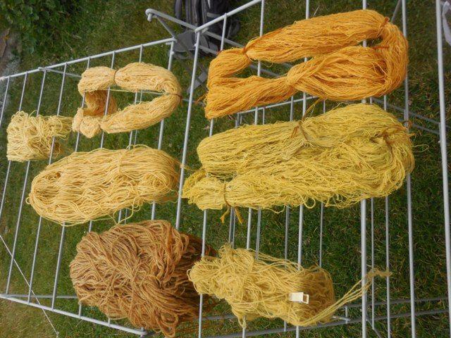 Vlna barvená v kručince barvířské. Wool dyed in Genista tinctoria Dyebath, Photo Kristýna Urbanová.