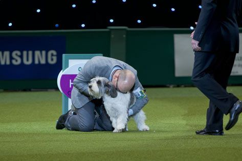 "YEAH!!! LONDON - A Petit Basset Griffon Vendeen called Jilly on 3/10/13 won the Best in Show award at Britain's Crufts festival, the world's largest annual dog show.    Jilly, from Oxfordshire, south England, was crowned champion ahead of more than 20,000 other dogs at the NEC arena in Birmingham, central England. ""She is just so busy, so naughty, she's such a character, a once in a lifetime dog,"" said owner Gavin Robertson."