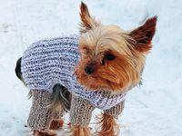 Svetr na míru čili jak uplést obleček pro psa