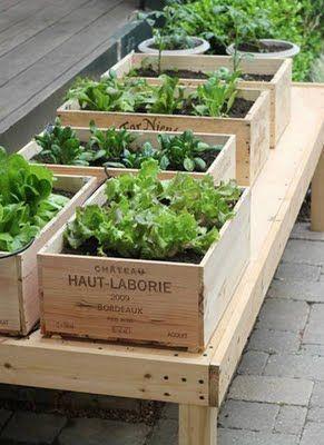 Gardening in wine boxes