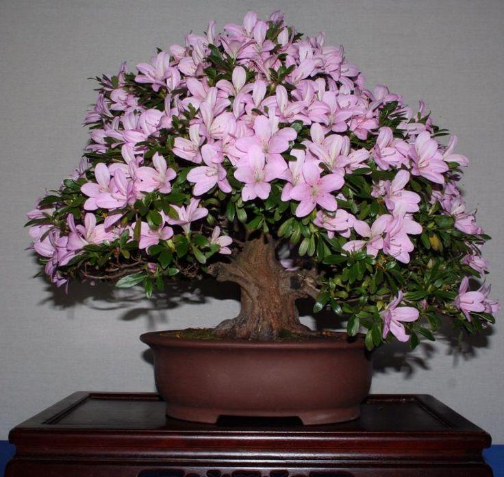 самые красивые комнатные цветы фото с названиями грядущее