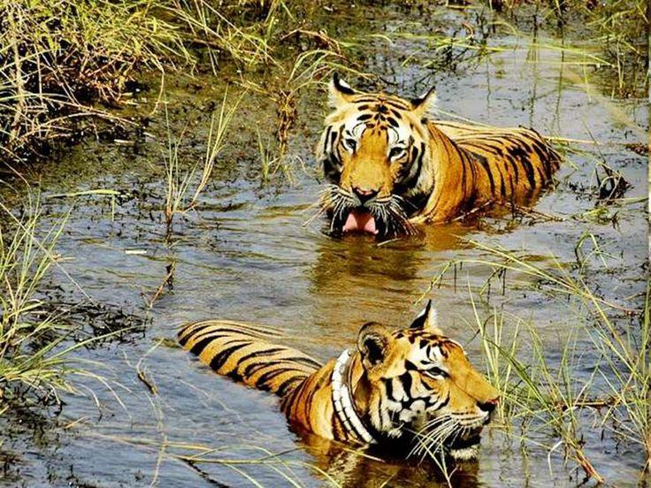 Pakhal Wildlife Sanctuary - in Warangal, Telangana, India