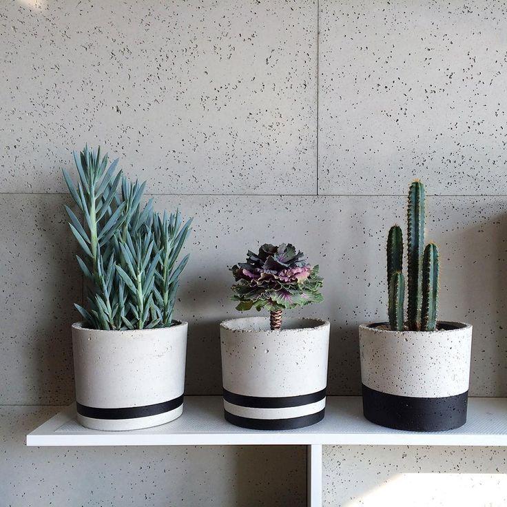XL'ki Pani Kasi  czy jest Pani tutaj z nami?  #growraw #beton #concrete #concretepots #concreteplanters #doniczki #handmade #rekodzielo #sukulenty #succulents #kapusta #cabbageflower