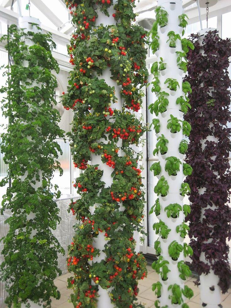 Aquaponics Meets Tower Garden @ The Garden Building Rooftop Greenhouse In  Orlando, FL Www.