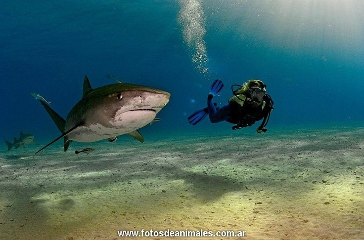 http://www.fotosdeanimales.com.ar/fotos-de.tiburones/
