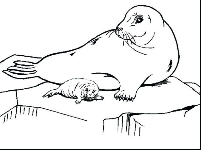 Exclusive Picture Of Seal Coloring Pages Albanysinsanity Com Lion Coloring Pages Coloring Pages Flag Coloring Pages