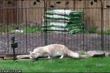 19 Funny GIFs To Cheer You Up | Just died....