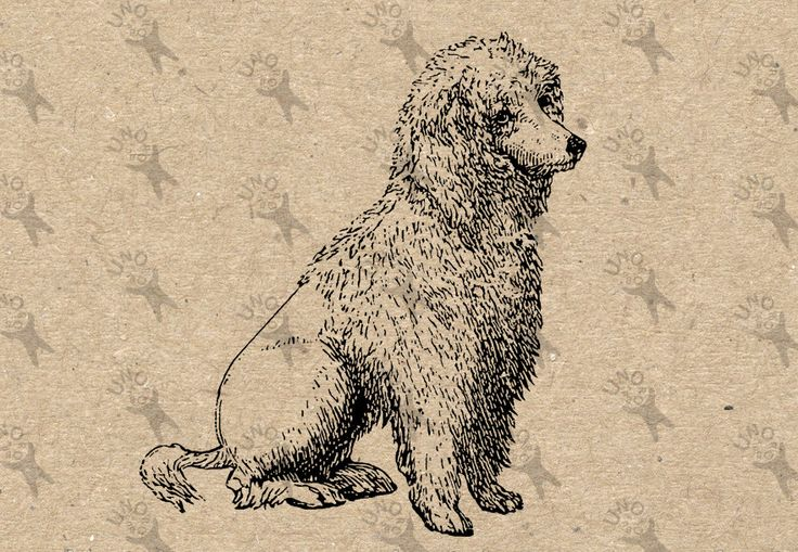 Poodle picture Vintage image Instant Download Digital printable clipart graphic scrapbooking burlap kraft tote towels t-shirt etc HQ 300dpi by UnoPrint on Etsy