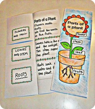 Fold and Learn - Students learn parts of a plant by creating this booklet. Each part of the plant is put on one side and on the other side is a description of the part. It is also available in spanish. SC.1.L.14.2 Identify the major parts of plants, including stem, roots, leaves, and flowers.