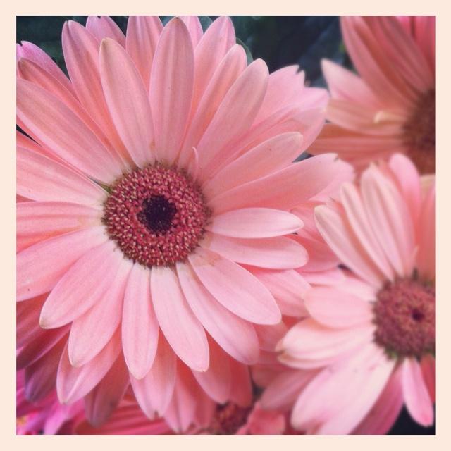 Pretty in Pink ⚓ René Marie Jardin via instagram http://followgram.me/ReneMarieHome