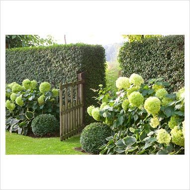 Top 25 best front yard hedges ideas on pinterest for 1000 designs for the garden and where to find them