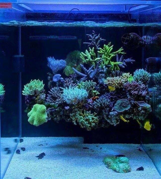 Live Rock Aquascape: Floating Reef.