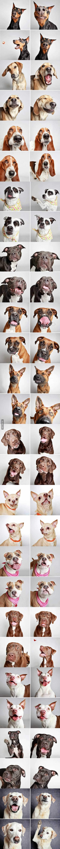 Una asociación ha realizado este photobook para fomentar la adopción de perros