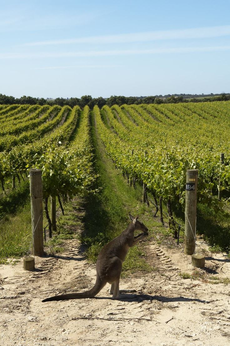 Penfolds Magill Estate Winery, Adelaide, Australia