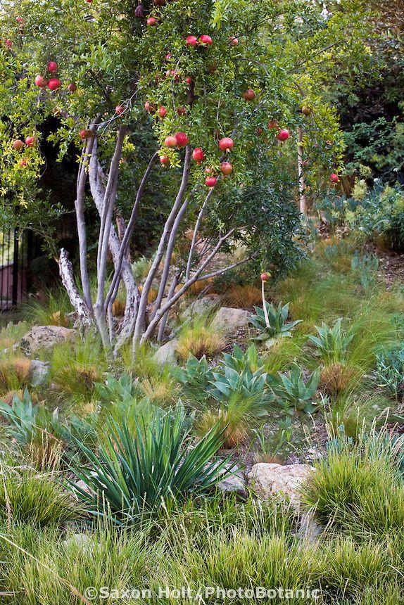 best 25 california native garden ideas on pinterest california native plants california. Black Bedroom Furniture Sets. Home Design Ideas