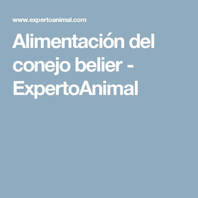 Alimentación del conejo belier - ExpertoAnimal