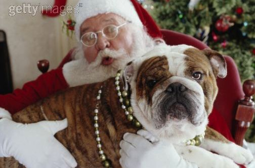 25 Photos of Santa with Bulldogs