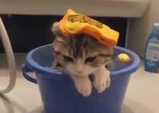 Roliga katter i vatten - http://djurblogg.nu/roliga-katter-i-vatten/