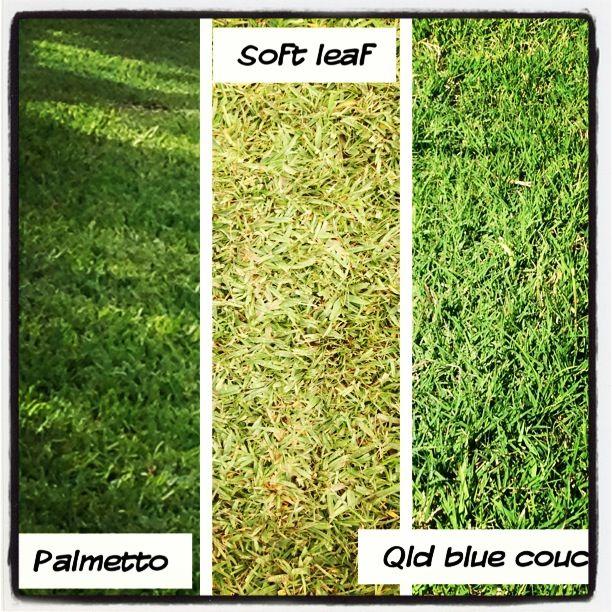 Compare the 3 grass