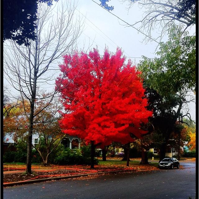 Fall, Chico, CA. 2011