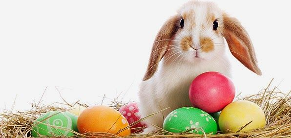 Funny Easter Images, Bunny,Eggs Pictures | Happy Easter 2015 Images, Wishes, Quotes, Greetings, Messages