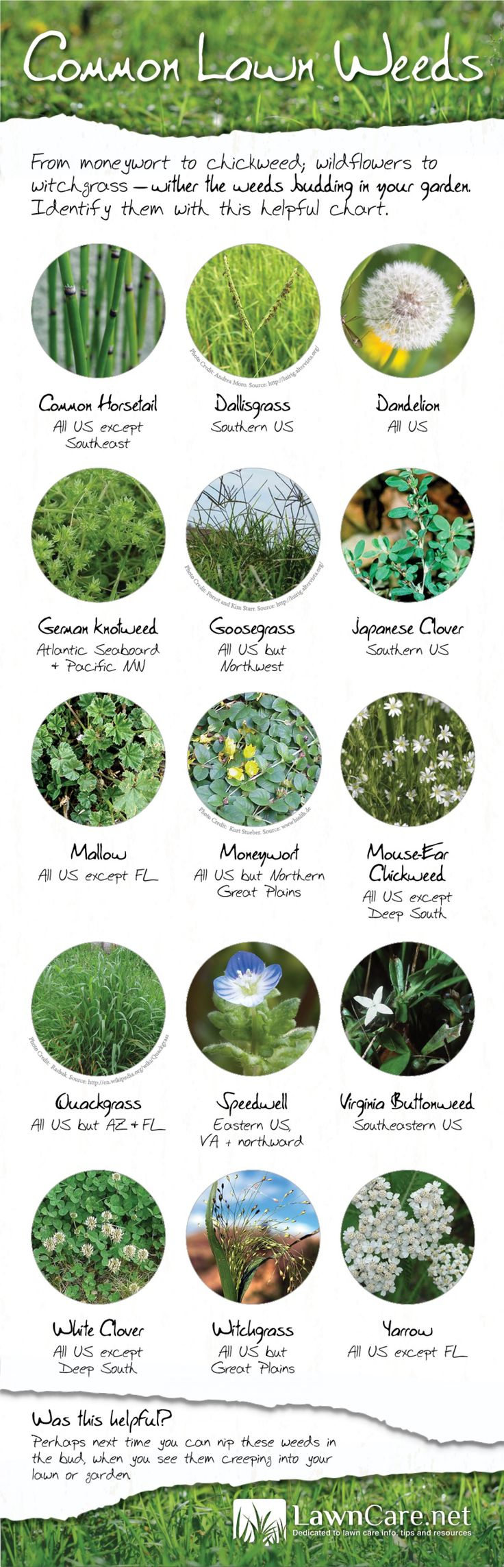 Common Lawn Weeds | Visual.ly