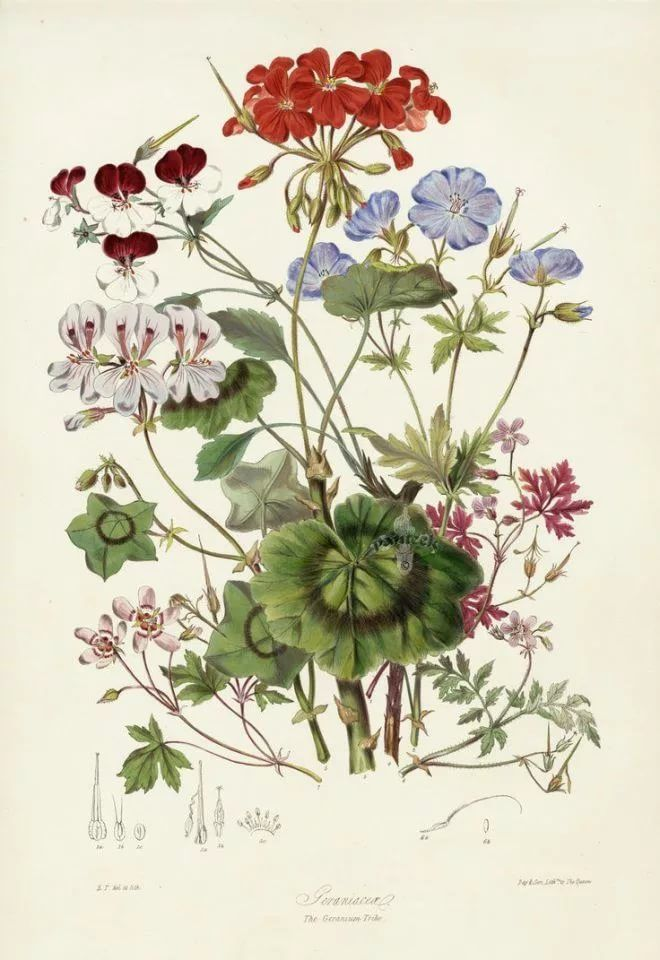 ботанические рисунки растений открытки платья, которые подчеркивают