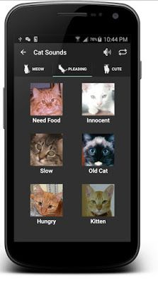 Top 10 Android Apps Untuk Pecinta Kucing  Android - April 19 2016 at 01:42PM