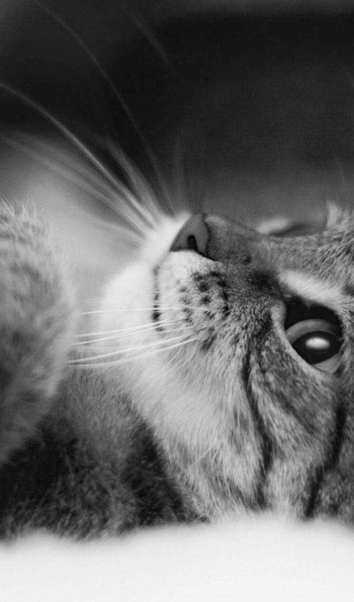 Gato | Gatito | Gato | Gatito | Lindo | Juguetón | Juguete | Dulce | Lindo | Educación física …   – Katzen ♥ dhal