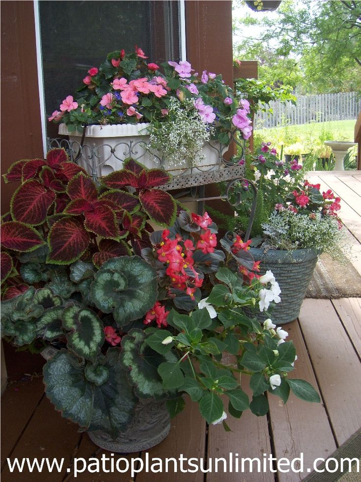 Container Gardens for shade Escargot Rex Begonia Coleus Impatiens double and single