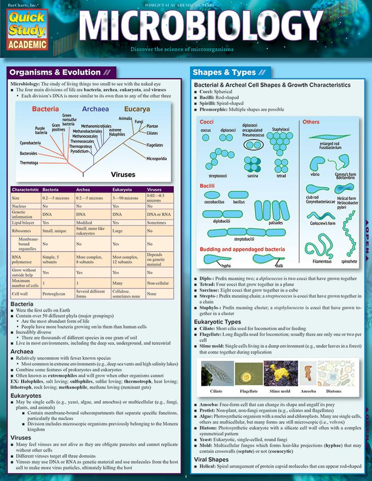 Microbiology  This reference answers the most important questions that form the foundation of Microbiology within 6 laminated pages. Carry this core material in a handy format to use beyond the course and into higher level and career courses, then even further into your working life as a refresher. With many diagrams in a small package, you will not need to crack the textbook to review.