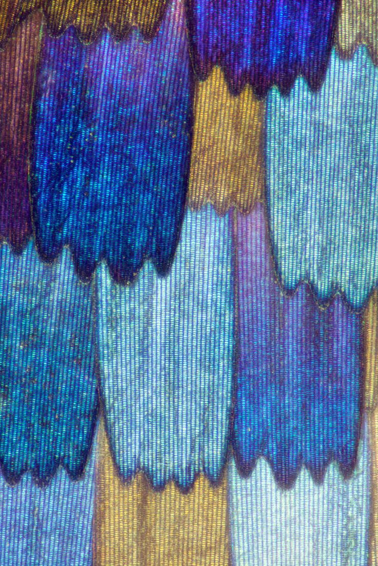 macro butterfly wings by linden gledhill look like prismatic quilts precis rhadama wing
