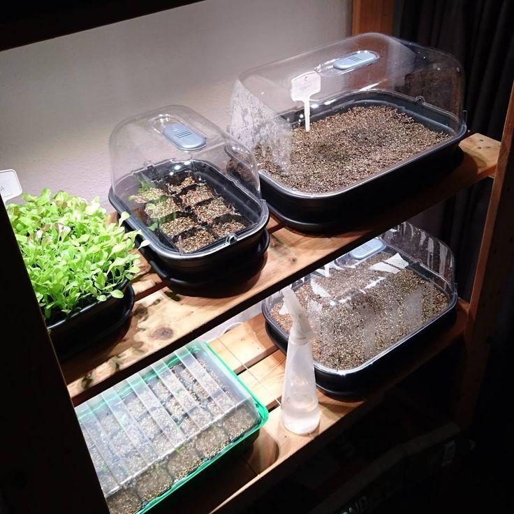 De kast is aangevuld met doperwtjes en kapucijners!!!  ik heb dit keer vermiculiet met zaai en stek grond gemixt een leuk diy projectje. Zo houdt het langer vocht vast en heeft het voldoende voeding om zeker 4 weken in deze bak groot en sterk te worden. Oh ik kan niet wachten #moestuin #erwtjes #zaaien #seeds #ikea #ikeaväxer #elho #myelho #zaailing #seedlings #vermiculiet #myelho #moestuingeluk #geluksmomenten #green #moestuin #floorsmoestuin #kitchengarden #vegeteblegarden #growsomethi...