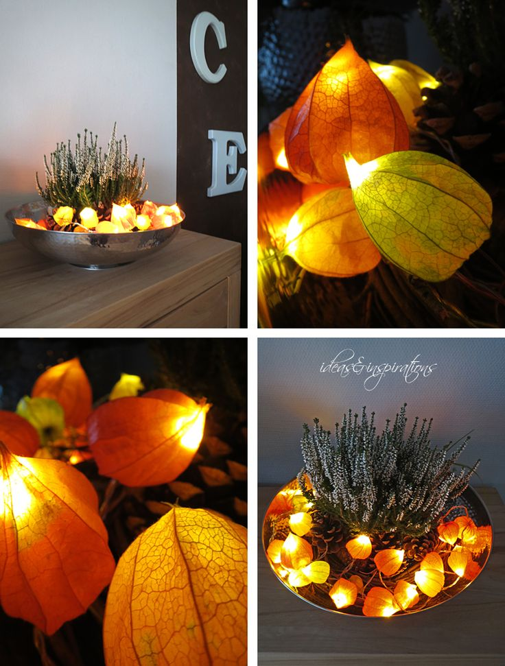 licht physalis lampignon tisch dekoration diy herbst fall pinterest autumn home fall. Black Bedroom Furniture Sets. Home Design Ideas