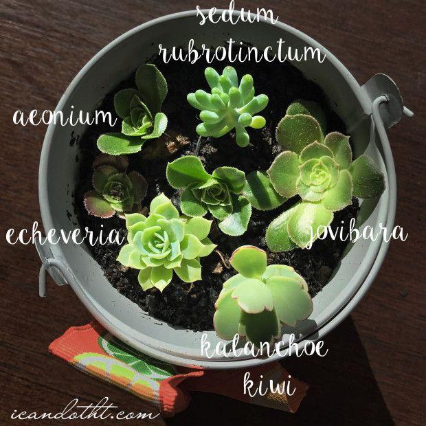 succulent planter on icandotht.com
