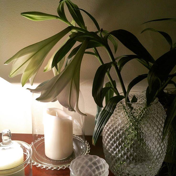 White lilies, lovely flowers with a lovely smell / witte lellies, mooie bloemen met een heerlijke geur