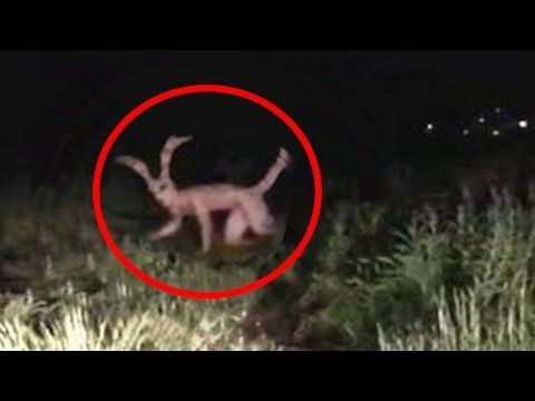 5 Chupacabras Caught On Camera & Spotted In Real Life ...