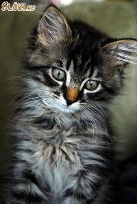 Aranyos cica