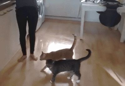 ... lol... poor kitty, I had a cat like this... when I saw him struggle w/ jumping... I would go over pick him up...like he was jumping, so I stretched him out, the landed him on what he was trying to jump to...w/in a year he was an expert jumper...