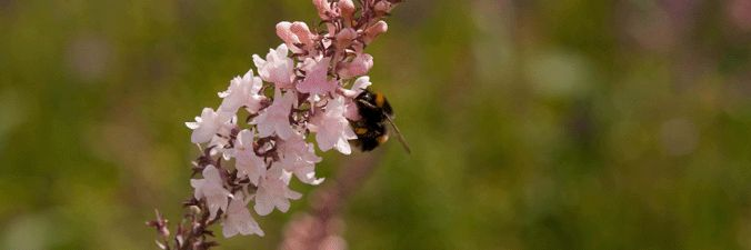 Bee's are one of the most important species out there, and our green roof provides pollen for the bees to feed from