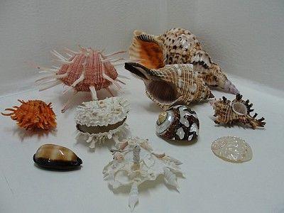 Le Meraviglie del Mare - ingrosso regali e souvenir