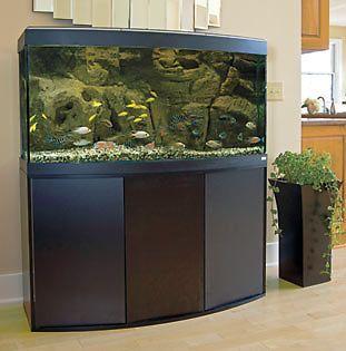 CO2 Aquarium Buying Guide