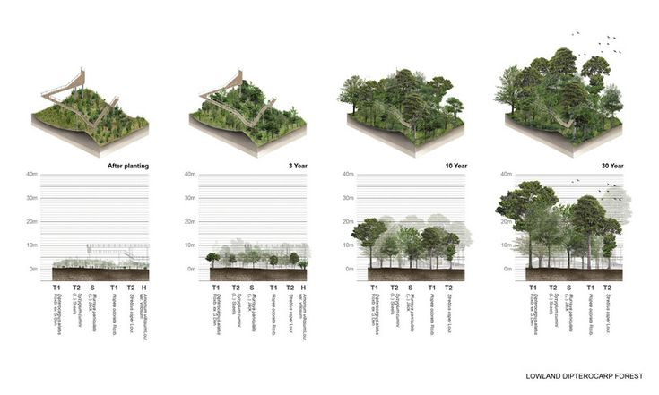 The metro forest project bangkok urban reforestation for Bc landscape architects