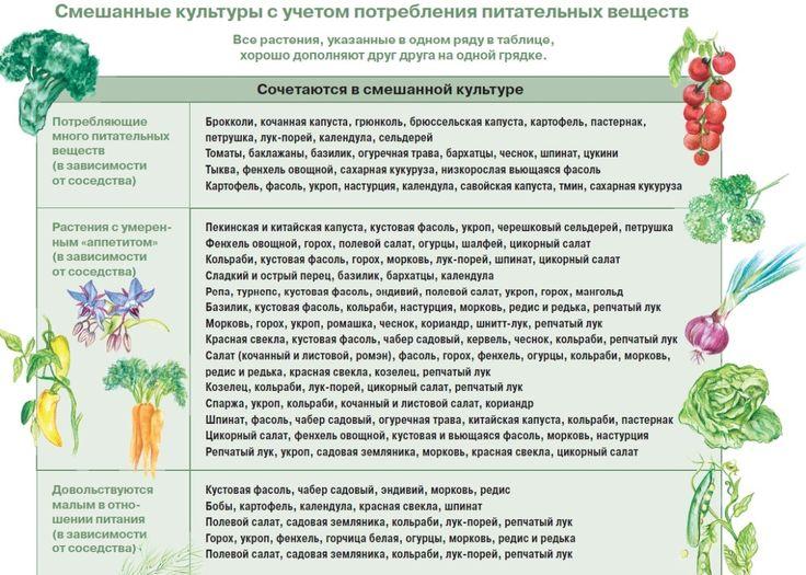 Им хорошо друг с другом, или О совместимости овощных культур / огород и грядки / 7dach.ru